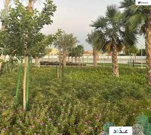 knoll-garden-saudi